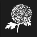 Chrysanthemum Logo