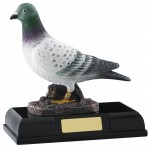 Resin Pigeon Trophies