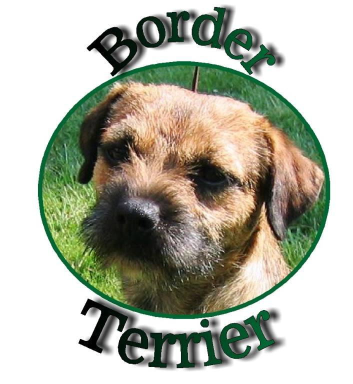 Dog - terrier