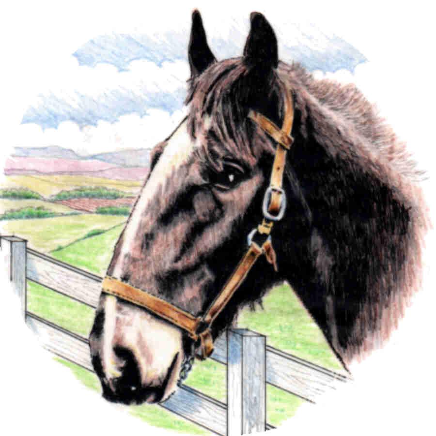 Horse (4)