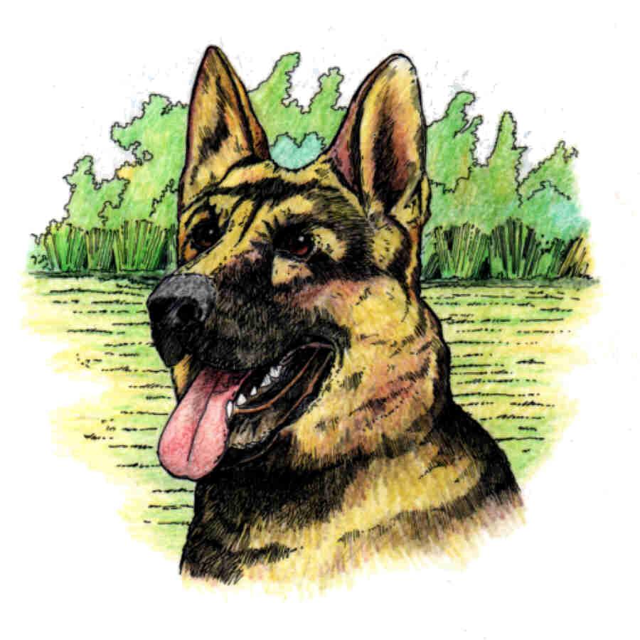 dog - ALSATION